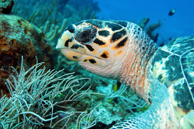 Turtle Cozumel Mexiko