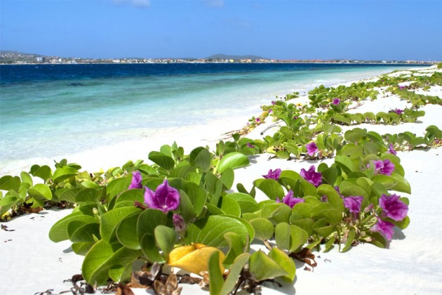 bonaire-strand-karibien-paradis