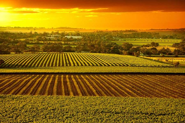 Barossa Vineyards Australien
