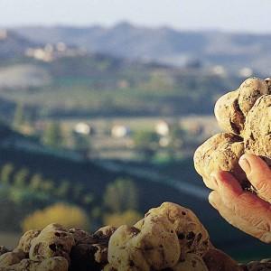 Tryffel i Piemonte Italien