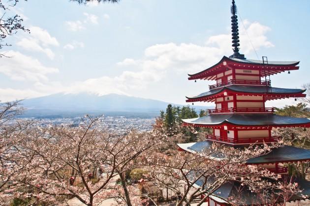 Japan Fuji körsbär