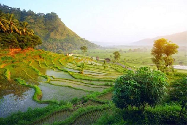 Grönt landskap i Indonesien