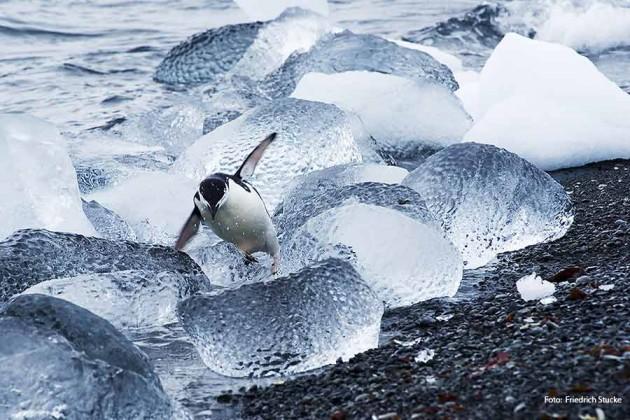 Antarktis Hurtigruten Foto; Friedrich Stucke