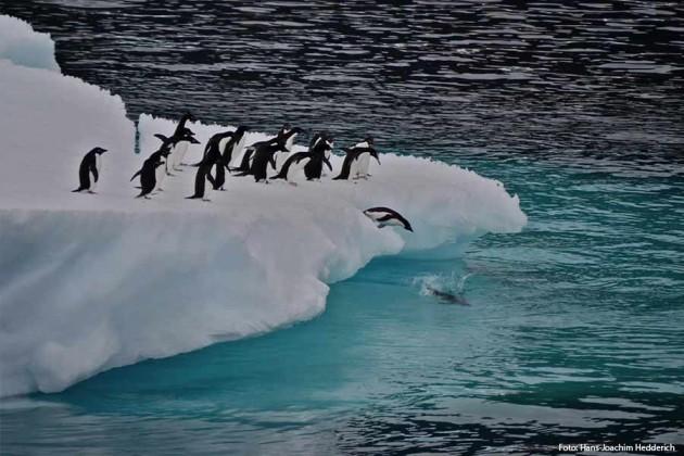Antarktis Hurtigruten Pingviner Foto: Hans Joachim Hedderich