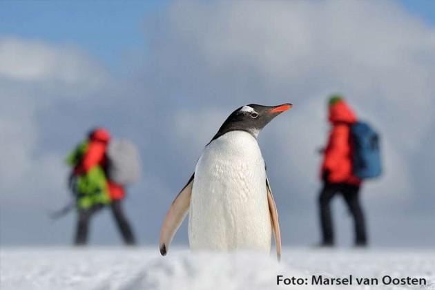 Antarktis Hurtigruten Foto: Marcel van Oosten