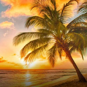 Härlig strand i Karibien