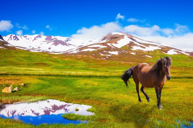 sommar-island-horse