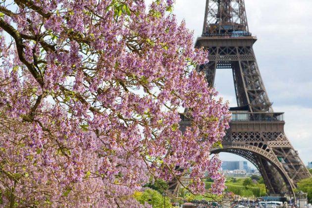 Vacker vårblom och Eiffeltornet i Paris.