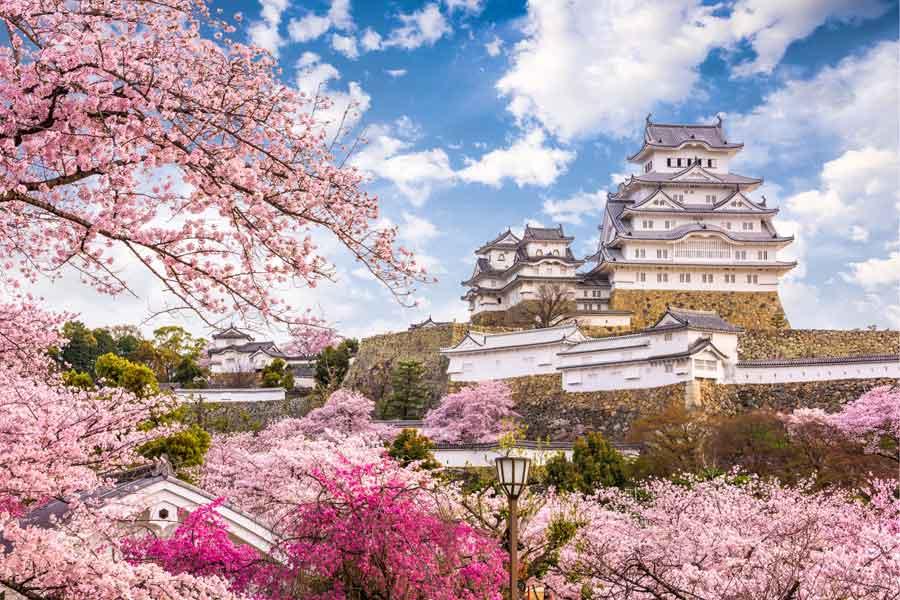 Japan Himeji körsbär