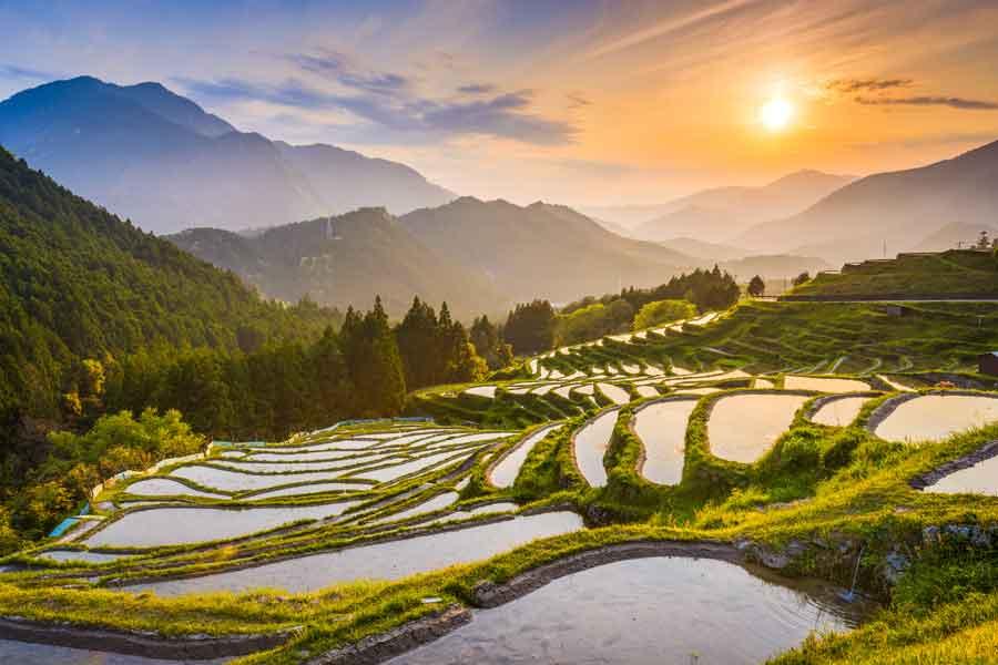Japan Risfält