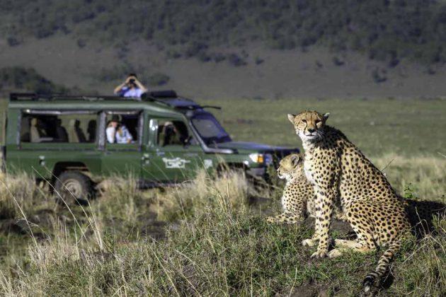 Kenya Masai Mara Gepard