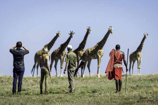 Kenya Masai Mara Giraffer