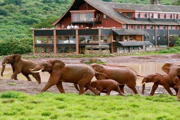 Kenya Hus Elefanter