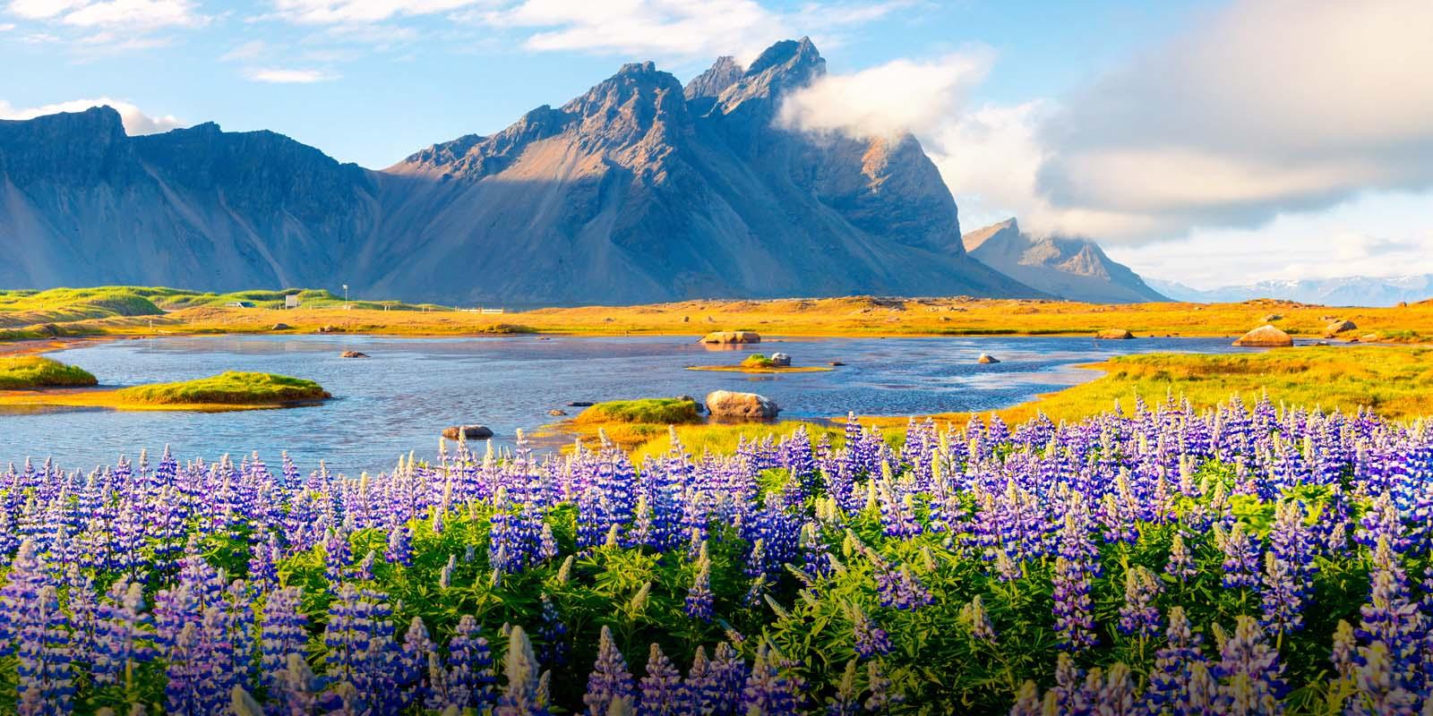 island natur topmall