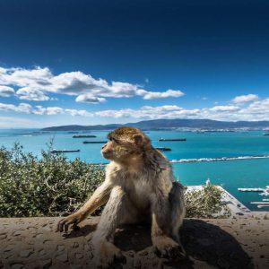 Kryssning till Gibraltar – Besök aporna på klippan