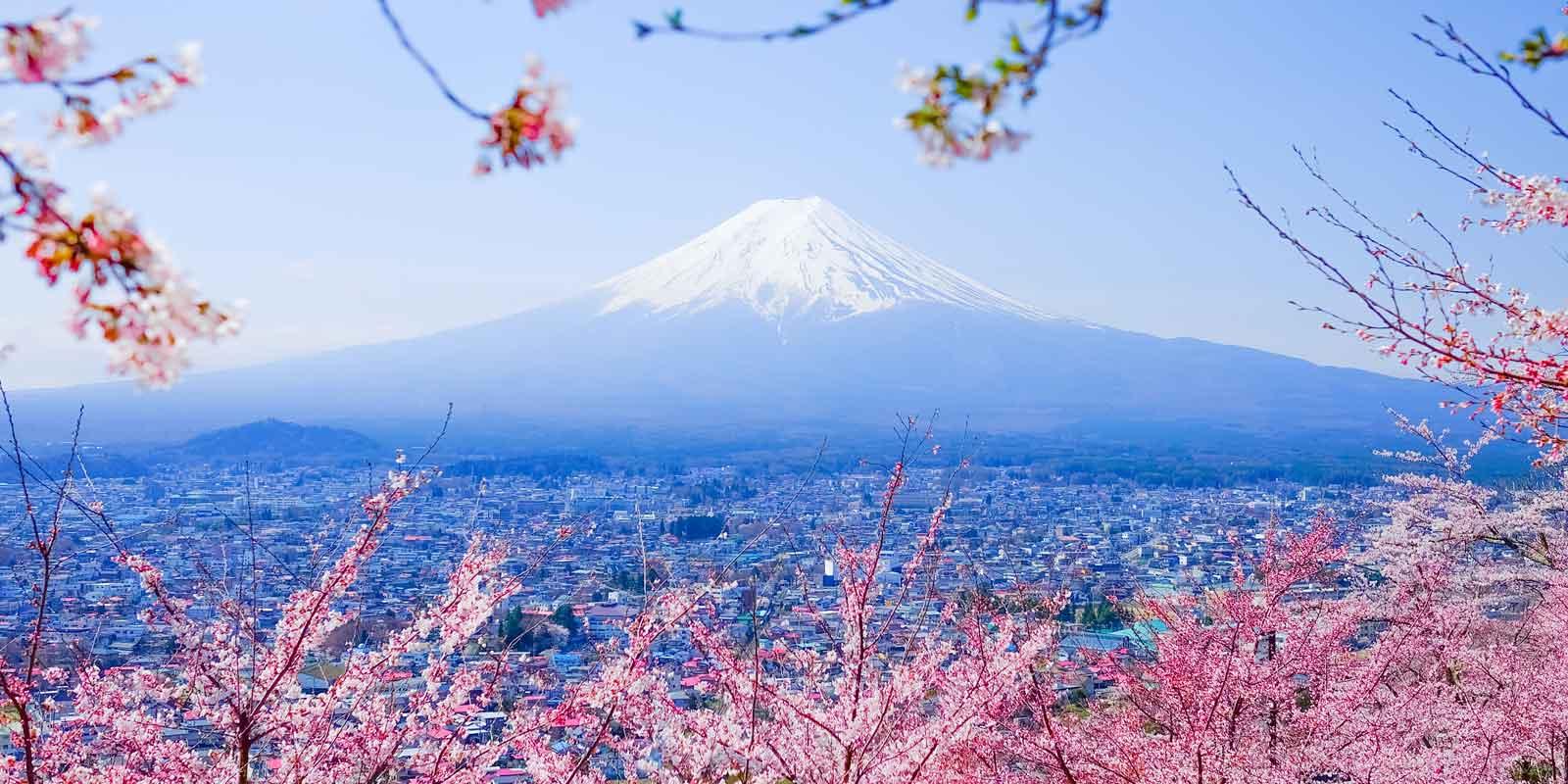 Japan Tokyo körsbärsblom