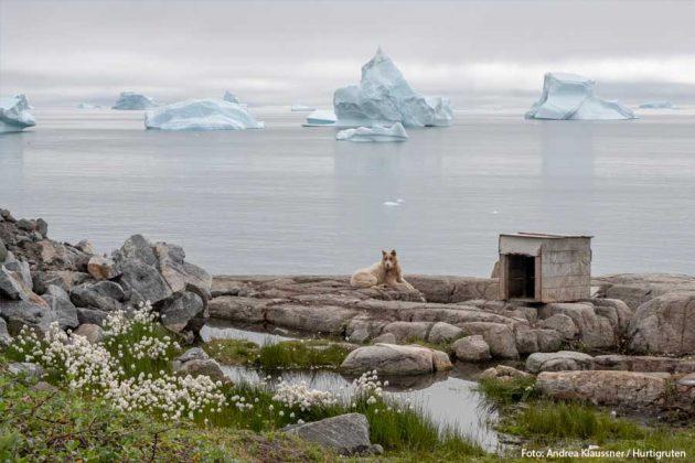 Qeqertarsuaq Grönland hund HGR