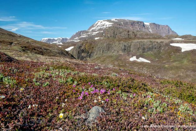 Qeqertarsuaq Grönland natur HGR