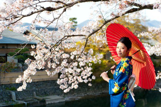 Japansk kvinna under blommande körsbärsträd.