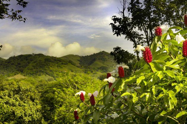 Vy över Costa Ricas grönska.