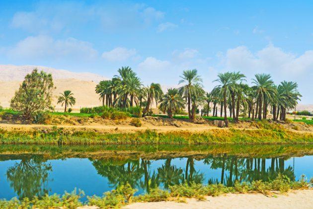 Grönskan reflekteras i vattnet i Esna, Egypten.