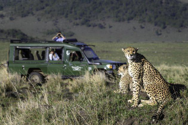 På safari i Masai Mara, med chans att komma djuren riktigt nära.