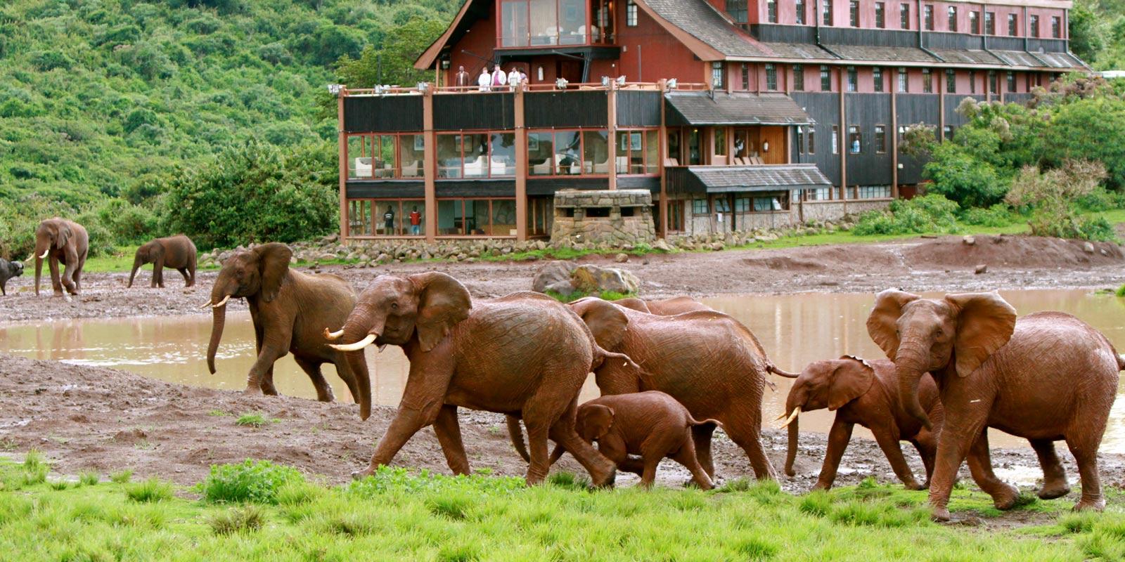 The Ark Hotel, Kenya.
