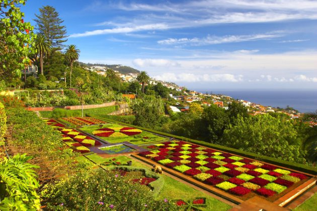 Botanisk trädgård i Madeira